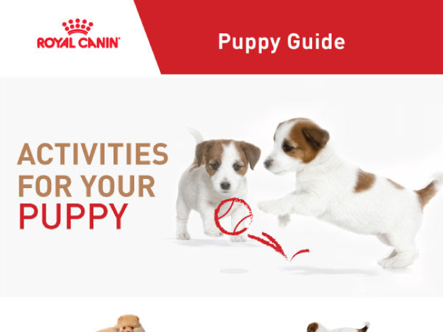 Royal Canin [puppy guide]