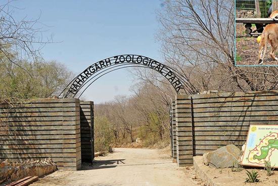 Nahargarh Zoological Park