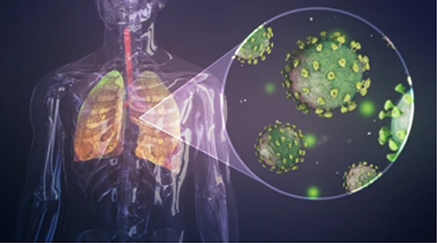 IMMUNE SYSTEM HEALTH AND ZINC